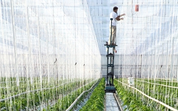 Growing faster with CO2-Plant cultivation in the Netherlands.